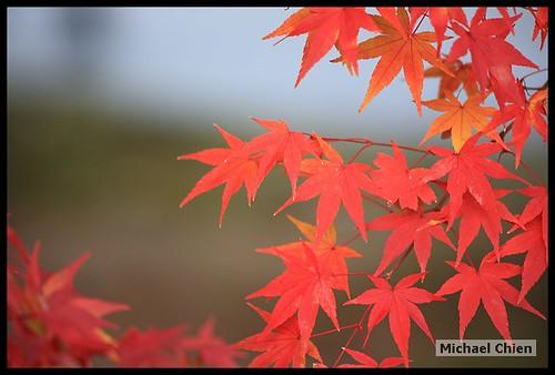 嵐山_20071124_151024_(1430)