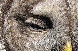 Close up of eyelid feathers
