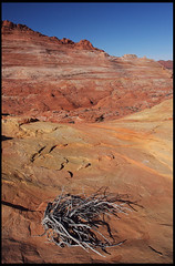 """The Wave"" (rickz) Tags: travel color tree beautiful beauty landscape utah ut sandstone scenery colorful desert hiking dry roadtrip hike 2007 kaleidoscopic thewave rockformation pariacanyon coyotebuttes grandcircle vermilioncliffs vermilioncliffsnationalmonument swirlingstrata gcrt2007d9"