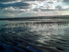 Shore Birds (jc.winkler) Tags: ocean birds coast washington shore shores