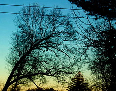 Favorite Tree On the Whole Moutain (Emmy Gee) Tags: sunset black tree silhouette leaning