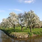 Beemster: Middenweg landscpae in spring