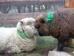 Happy St. Patrick's Day ! (aprilamb) Tags:
