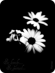 So lovely...so special... (Harraz) Tags: flowers bw white black flower love special lovely sospecial solovely mywinners abigfave harraz harrazphotography goldstaraward
