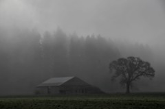 fog 2 (drburtoni) Tags: fog oregon mercedes farm country eugene mga
