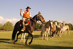 Se encuadrando (Eduardo Amorim) Tags: horses horse southamerica argentina criollo caballo cheval caballos cavalos pferde herd cavalli cavallo cavalo gauchos pferd pampa hest hevonen chevaux gaucho  amricadosul hst gacho  campero amriquedusud provinciadebuenosaires  gachos  sudamrica sanantoniodeareco suramrica amricadelsur  areco firstquality sdamerika gregge crioulo troupeau caballoscriollos herde criollos  tropillas  pampaargentina camperos americadelsud tropilhas tropilla  crioulos cavalocrioulo americameridionale tropilha caballocriollo campeiros campeiro eduardoamorim cavaloscrioulos explorewinnersoftheworld fabulstica pampaargentino