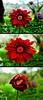 Sbalzi di umore (© Graziano Rinna ) Tags: reflex nikon sigma fiori rosso 30mm d40x trilogias