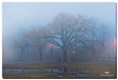 FEBRUARY 2017-020847-2222 (Nick and Karen Munroe) Tags: fog foggy mist misty weather weatherevent brampton ontario canada beauty beautiful blue nikon nickandkarenmunroe nickmunroe nature nikon2470f28 nikond750 nickandkaren karenick23 karenick karenandnickmunroe karenmunroe karenandnick munroedesigns munroephotography munroe munroedesignsphotgraphy outdoors landscape trees dawn daybreak winter