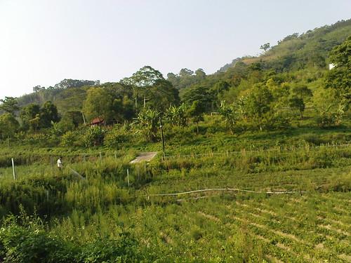 大窩生態園區裡的草莓園
