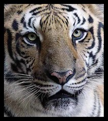 Animais incríveis... - Neu Pinheiro