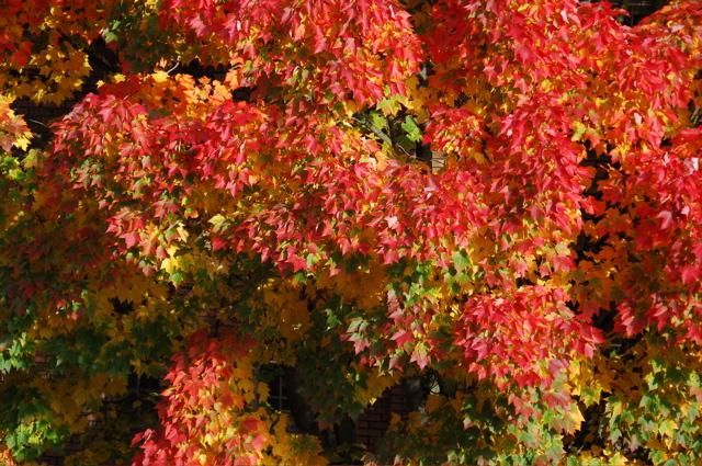 101407_leaves1