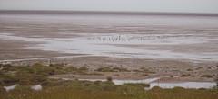 estuary4