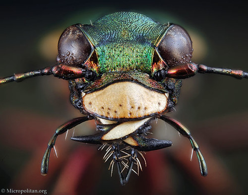 1936272837 d64152990e Amazing Insects!