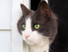 these eyes... (_Rachelle) Tags: old pet animal cat photoshop picture award best retouching todays doudoune golddragon abigfave kissablekat bestofcats