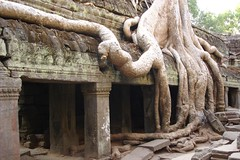 Angkor temples (TRAVEL4VITALITY) Tags: travel temple reisen asia asien cambodia kambodscha khmer angkorwat unesco worldheritagesite siemreap angkor taprohm worldheritage tempel weltkulturerbe angkortemples travel4vitality