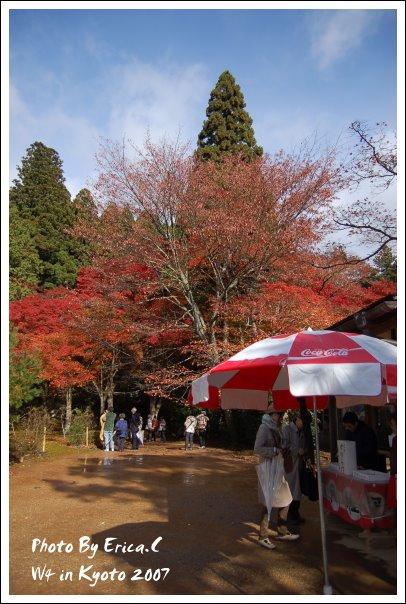 神護寺下 (1)