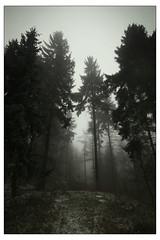 (felix.h) Tags: wood trees winter mist cold nature misty fog forest canon germany landscape eos haze woods frost foggy wideangle spooky hazy niedersachsen lowersaxony sigma1020mm deistermountains deister sigma1020 400d canoneos400d digitalrebelxti eoskissdigitalx