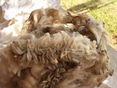 Kurrajong Fleece