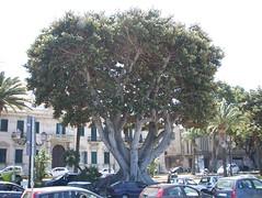 Reggio Calabria-  Maggio 2007 298 (maxroll42) Tags: reggiocalabria lungomare calabria reggio