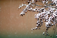 Snow (floridapfe) Tags: camera winter white snow tree ice nikon korea falling snowfall  everland snows  d80 platinumphoto impressedbeauty aplusphoto southkroea platinumheartaward