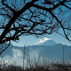 Mt. Fuji from a Peach Orchard (beeldmark) Tags: mountain mountains berg japan rural geotagged japanese countryside orchard  fujisan bergen  peachtree mtfuji vulcano yamanashi japonais vulkaan japans kasugai inaka   500x500 japanisch  ruraljapan yamanashiken k10d pentaxk10d  geo:lat=35673518  kasugaicho fuefukishi beeldmark geo:lon=138656859