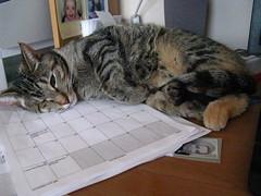 Desktop nap