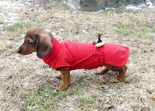 Hertta's first coat