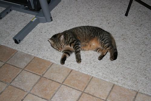 Pic 22 - Cat