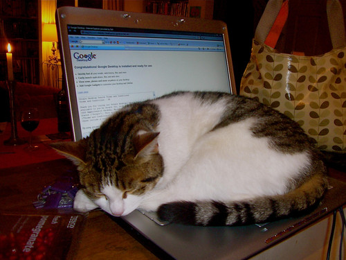 Cat_Laptop
