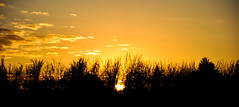 Stupenda luce! (Claudia Oseki) Tags: road brazil sky sun tree nature sunshine yellow braslia brasil landscape bush shine paisagem cu goinia gois silhueta silhuette mygearandme