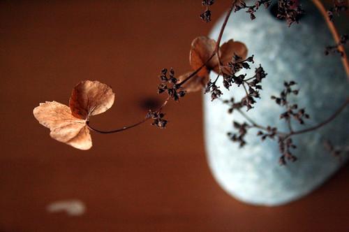Climbing hyrdrangea in rock vase