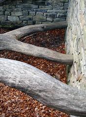 Hanging Trees (craigjam) Tags: england sculpture tree yorkshire 2007 yorkshiresculpturepark andygoldsworthy