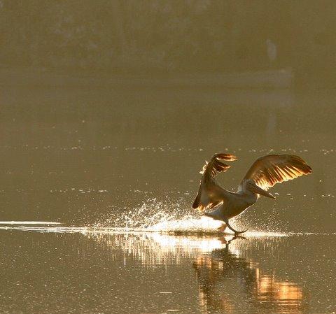 backlit pelican landing 241107