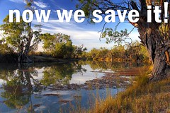 now is the time to save the river! - link to the katarapko creek and murray river national park pages