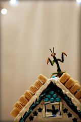 "the praying mantis players present: ""fiddler on the roof!"" (tamelyn) Tags: blue white house candy chanukah gingerbread icing shul prayingmantis hanukkah fiddlerontheroof doyouknowhowharditistofindbluecandy astevye happychanukahyall"