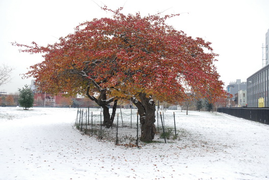 McCarren Tree Snow