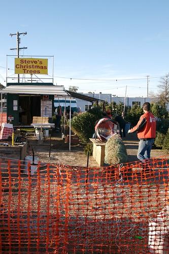 Christmas Tree Farm in San Carlos