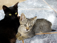 Mother and son (Kitty & Kal-El) Tags: pet cute animal cat feline mother son gatos gato gata felinos felino filhote motherandson gatinho gatinha cc100 kissablekat bestofcats superhearts photofaceoffwinner platinumheartaward camfjan08