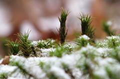 tiny moss trees
