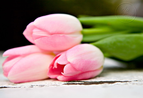tulips3-wm
