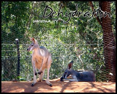 Kangaroo: Dehydration