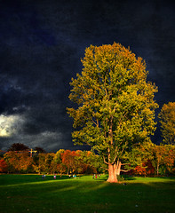Before The Storm (Philipp Klinger Photography) Tags: park autumn light sky storm tree green fall texture grass kids clouds germany deutschland football hessen frankfurt soccer meadow dramatic hesse grneburg goldenphotographer photofaceoffwinner goldstaraward dcdead