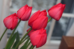 tulips from the church