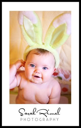 web bunny 03