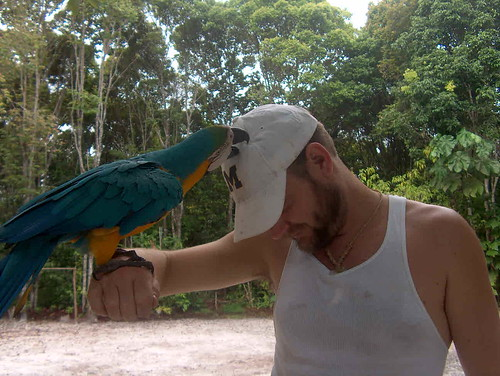 El Guacamayo the Victor!!!