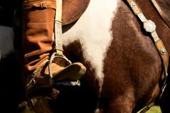 Num tobiano (Eduardo Amorim) Tags: brazil horses horse southamerica brasil silver criollo caballo cheval caballos gold or plata cavalos pelotas pferde cavalli cavallo cavalo gauchos pferd riograndedosul argent pampa loro ouro oro campanha brsil chevaux gaucho prata staffa silber  amricadosul stirrup argento platera gacho estribo amriquedusud  gachos  sudamrica suramrica amricadelsur sdamerika crioulo caballoscriollos criollos  pretal steigbgel costadoce americadelsud plateracriolla crioulos cavalocrioulo americameridionale caballocriollo peiteira eduardoamorim cavaloscrioulos estribera estrivo trier seeyousoonxxxooo
