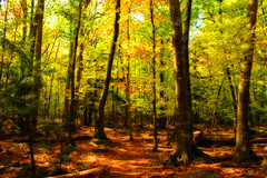 The Enchanted Forest (nature55) Tags: autumn fab fall nature colors wisconsin forest outdoors woods colorful searchthebest naturesfinest nature55 abigfave anawesomeshot impressedbeauty ultimateshot goldenphotographer diamondclassphotographer flickrdiamond theperfectphotographer