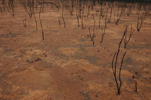 Dry bushland...