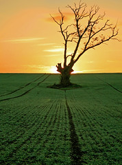 Field at Sunrise (-terry-) Tags: tree field wales sunrise dawn photographer excellent awards monmouthshire naturesfinest ploughedfield cotcmostfavorited flickrsbest anawesomeshot superaplus aplusphoto treesubject diamondclassphotographer flickrdiamond flickrchallengewinner 15challengeswinner rogiet