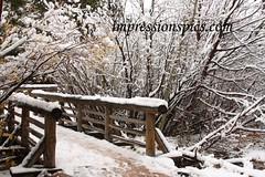 Snowy Trail 1